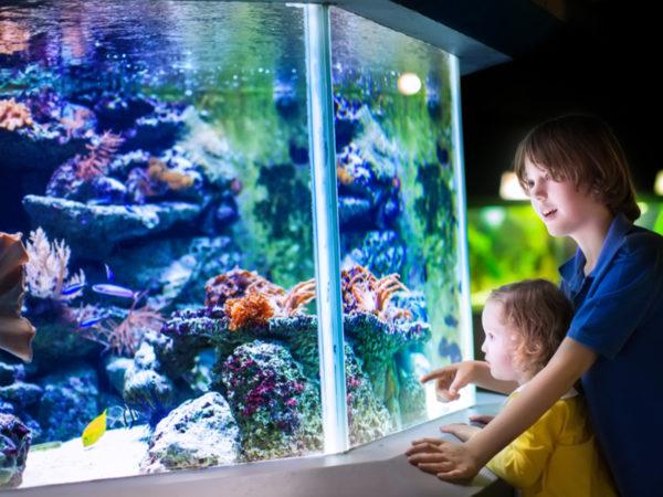 休校中のおうち時間に! 自宅で水族館気分が味わえるオンライン配信がスタート!