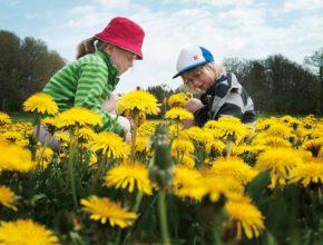 子供の環境保護意識を芽生えさせる! 「森のムッレ教室」とは?